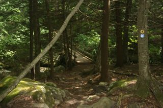 Shade on the Escarpment Trail in the Catskills (http://www.nature-photography-in-the-rough.com/)