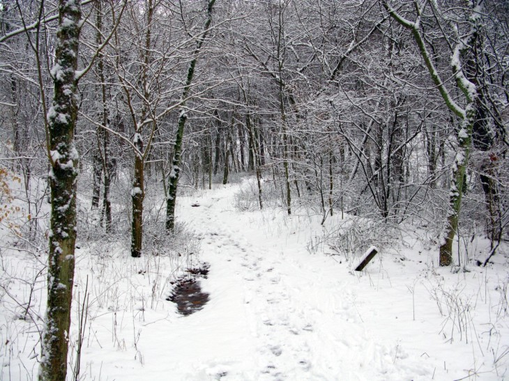 (Forestwander.com via Wikimedia Commons)